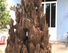 """Lặn lội hơn 20 năm, đại gia Hà thành tốn hàng """"đống"""" tiền để có bộ sưu tập từ gỗ trầm lũa"""