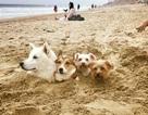 """Những hình ảnh siêu hài hước vô tình """"chộp"""" được trên bãi biển"""
