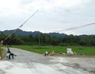 Dịch tả lợn Châu Phi đã xuất hiện tại Quảng Bình
