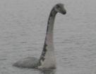 """Phân tích DNA từ hồ Loch Ness để tìm """"quái vật"""" huyền thoại"""