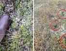 Hàng loạt dấu chân khổng lồ kì lạ xuất hiện tại Mỹ