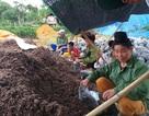 Cất bằng kỹ sư công nghệ thông tin, về núi trồng nấm thành tỷ phú