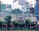 Vụ tàu container đâm cầu cảng trên sông Sài Gòn: Lỗi tại thời tiết?