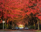Bản tình ca mùa thu Bắc Mỹ