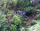 Tá hỏa phát hiện xác chết đang phân hủy ở công viên