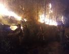 Gần 3.000 người trắng đêm dập lửa cứu rừng thông cổ thụ
