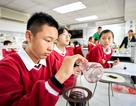 Chương trình Hóa học lớp 8: Chủ quan khiến nhiều học sinh bị mất gốc