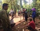 Vườn sầu riêng nghi bị đầu độc, thiệt hại trên 300 triệu đồng
