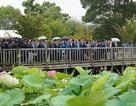 Thủ tướng mượn ca dao về hoa sen để nói tình thân sâu sắc Việt - Nhật