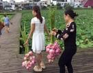Khách trèo rào hái trụi hoa sen, công viên Trung Quốc buộc phải đóng cửa