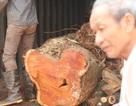 """Vỡ kế hoạch bán đấu giá hơn 5 tấn gỗ """"sưa trăm tỷ"""""""
