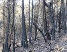 Chỉ 30% diện tích rừng bị cháy ở Nghi Xuân có khả năng phục hồi