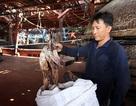 Trung Quốc ngừng mua, 1.000 tấn mực lưu kho: Quảng Nam đề nghị hỗ trợ