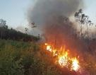 Rừng keo cháy dữ dội, 300 người lăn lộn hơn nửa ngày chưa dập được lửa
