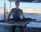 Cá heo bị thương dạt vào bãi biển Quất Lâm sau bão số 2