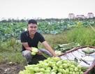 Khởi nghiệp từ trồng sen