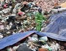 """Hà Nội: Người dân """"mở cửa"""" bãi rác Nam Sơn sau gần 1 tuần chặn xe rác"""