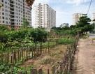 Hà Nội: Trúng đấu giá đất ở khu đô thị mới nhưng 10 năm... vẫn chưa được nhận đất