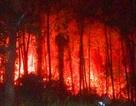"""Xác định """"thủ phạm"""" gây ra vụ cháy rừng thông già gần lăng vua Khải Định"""