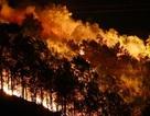 Hơn 500 người trắng đêm vật lộn với lửa rừng ngùn ngụt
