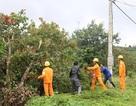 PC Đắk Nông đảm bảo an toàn lưới điện trong mùa mưa bão