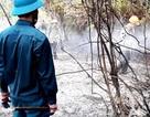 Đã dập tắt vụ cháy rừng keo ở Quảng Nam