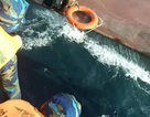 Tàu chở 15.000 lít dầu bị chìm, 4 thuyền viên được cứu sống