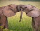 Tìm ra cách tính tuổi thọ của các loài động vật