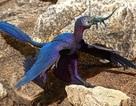 Loài thằn lằn bí ẩn mới được tìm thấy bên trong dạ dày khủng long bay 125 triệu năm tuổi
