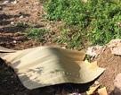 Tá hỏa phát hiện nam thanh niên tử vong cạnh xe máy ở khu đất trống