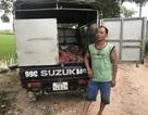 Bắt giữ xe ô tô chở gần 1 tấn thịt lợn chết đã bốc mùi
