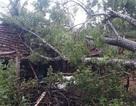 Lốc xoáy đánh tốc mái nhà dân, gãy đổ nhiều cột điện