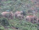 Nghệ An chi gần 19 tỷ đồng bảo tồn khẩn cấp đàn voi