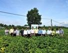 Vinasoy đạt bước tiến mới trong hành trình nghiên cứu và chọn tạo giống đậu nành