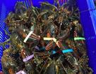 Tôm hùm Alaska về Việt Nam 170 ngàn đồng/kg, rẻ giật mình như tôm ngoài chợ