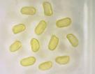 Các nhà khoa học vừa tạo ra chất lỏng từ tính vĩnh viễn đầu tiên