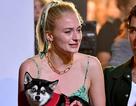 Sophie Turner buồn bã ra phố sau khi cún cưng bị xe đâm chết
