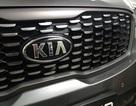 Kia Australia xác nhận đã bắt tay vào làm xe bán tải