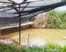 Phát hiện thi thể đôi nam nữ dưới hồ trữ nước tưới