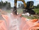 Đồng Nai xin Trung ương 800 tỷ đồng để chống dịch tả lợn châu Phi