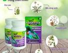 Top 5 thảo dược hỗ trợ chữa viêm họng amidan hiệu nghiệm