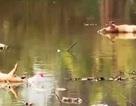 Nghệ An: Tiếp tục lấy nước sông Đào cấp cho người dân sử dụng