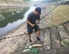 """Dân câu kiếm cá sông Tô Lịch """"dễ như đi chơi"""""""