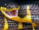 Vườn thú để rắn độc xổng chuồng tẩu thoát