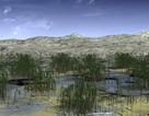 Phát hiện khu rừng hóa thạch 419 triệu năm tuổi ở Trung Quốc