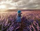 Những bức ảnh tuyệt đẹp về Mẹ Thiên nhiên trong giải thưởng nhiếp ảnh Agora 2019