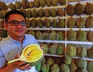 """""""Vua trái cây"""" Malaysia kiếm hàng chục tỷ đồng mỗi tháng nhờ bán sầu riêng"""