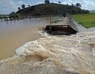 Vỡ đê, 1.000 ha lúa chìm trong biển nước