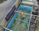 TPHCM chưa vội chọn công nghệ xử lý nước như ở sông Tô Lịch