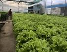 Sau mưa lũ, các loại rau xanh Đà Lạt đồng loạt tăng giá